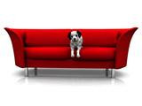 A cute dalmatian puppy in a red sofa. poster