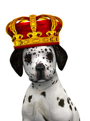 A cute dalmatian puppy with a crown on his head.