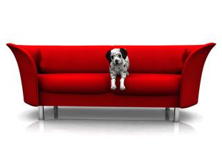 A cute dalmatian puppy in a red sofa.