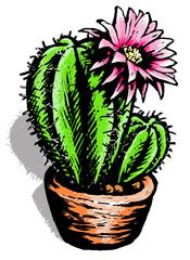 Cactus illustrated