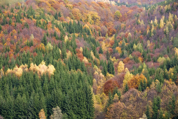 Autumn colors in the mountain