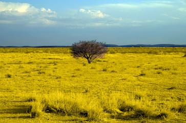 Namibia - Savana