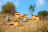 Wooden beehive boxes in a forest. Honey production.