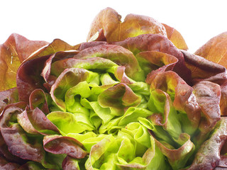 Salat Lollo rosso