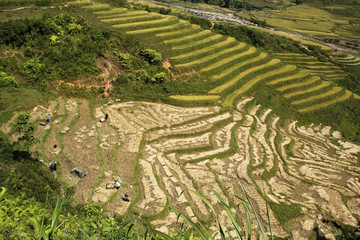 Rice terraces on the side of a hill
