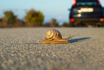Snail's way