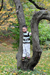 Tree Stander