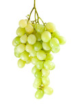 Green grapes bunch (muscat breed) isolated on the white poster