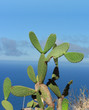 Gomera Kaktus 1.2