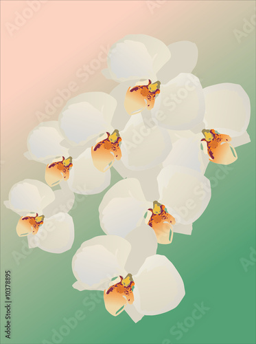 illustration with white orchid