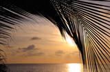 coconut palm tree leaf silhouette against tropical beach