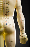 Rear view of acupuncturists model showing back and arm