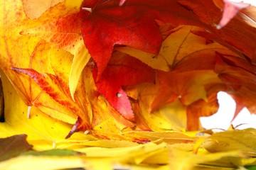 tube de feuilles mortes