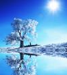 roleta: Christmas theme- frozen trees