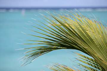Palm frawn and turquoise water