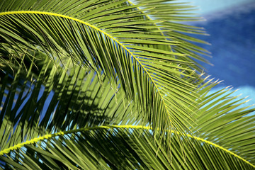 a background image of a green palm tree