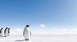 Kaiser Pinguine