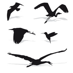 Mixed Bird Silhouettes