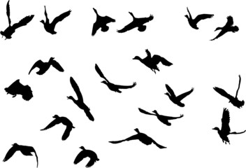 mallard ducks flying silhouettes, collection for designers