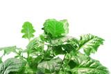 greenery poster