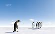Five Emperor Penguins in Antarctica