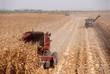 Combines harvesting corn, San Joaquin Valley, California - 10444241