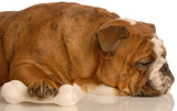 english bulldog sleeping with protective paw on dog bone poster