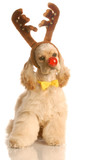 cocker spaniel dressed up as rudolph poster