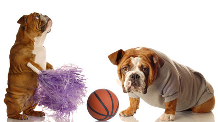 english bulldog cheerleader and basketball star