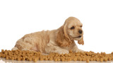 american cocker spaniel puppy surrounded by dog food poster
