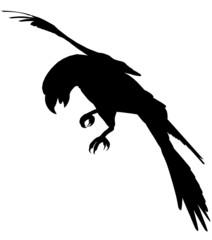 Macaw103