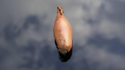 Organic shallot onion