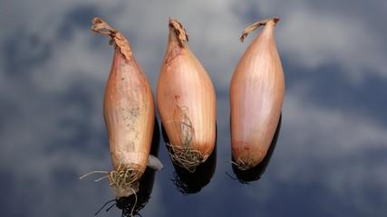 Organic echallion shallot onions
