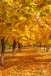 Colorful autumn avenue. Nice october background