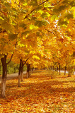 Colorful autumn avenue. Nice october background poster