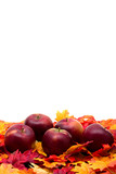 Fall leaves with red apples on white background, fall scene