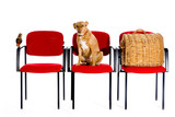 waitingroom veterinary with bird dog and cat at the seats poster