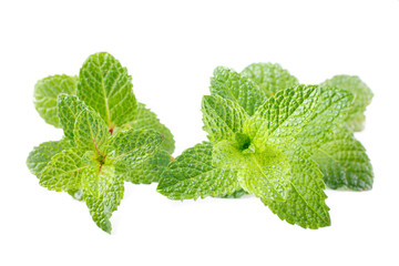 two mint stem of mentha spicata isolated on white