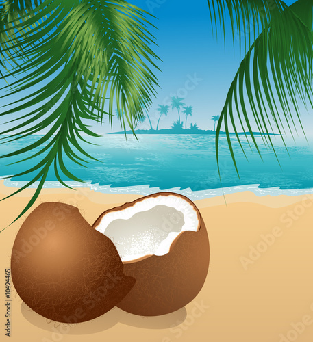 Coconut on the beach under palm tree, vector illustration