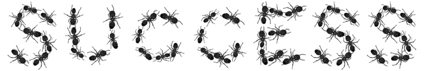 A group of ants arranged to form the word Success.