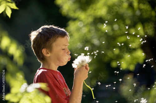Boy (6-7) blowing seed pod, close-up