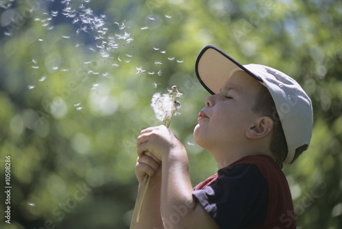 Boy blowing dandelion seeds, side view