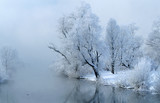Germany, Bavaria, Amper river, snow-covered tree