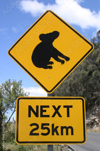 Attention, Koala crossing