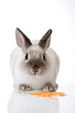 Bunny with carrot slices