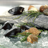 Mussels and shells on crushed ice, close-up