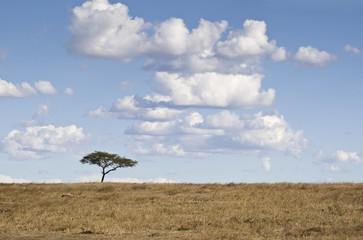 Tree and cloudscape, Masai Mara, Kenya, Africa