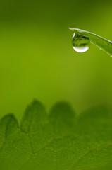 Wassertropfen auf Grashalm, close-up