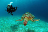 Philippines, diver with green sea turtle