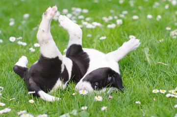 cute puppies in the meadow